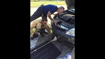 Bald eagle saved from car bumper