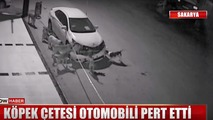Toyota Corolla ripped apart by pack of stray dogs