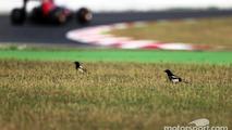 Carlos Sainz Jr., Scuderia Toro Rosso STR10 passes birds in the grass