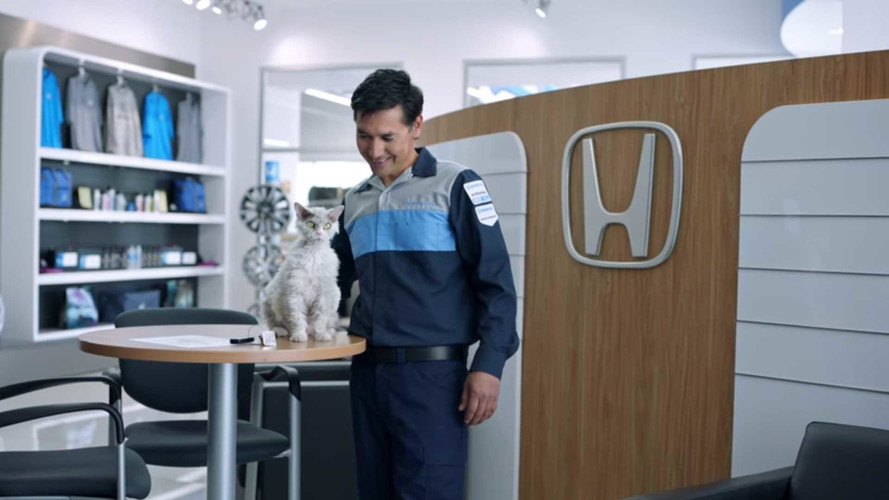 Pompous Albert Is Honda's New Service Cat With An Attitude