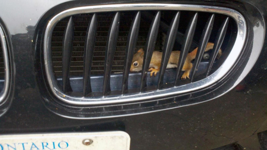 Baby squirrels rescued from a BMW Z4 M at Watkins Glen