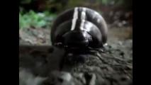 Volkswagen New Beetle - Video del Super Bowl