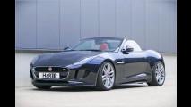 Andere Federn für starken Jaguar