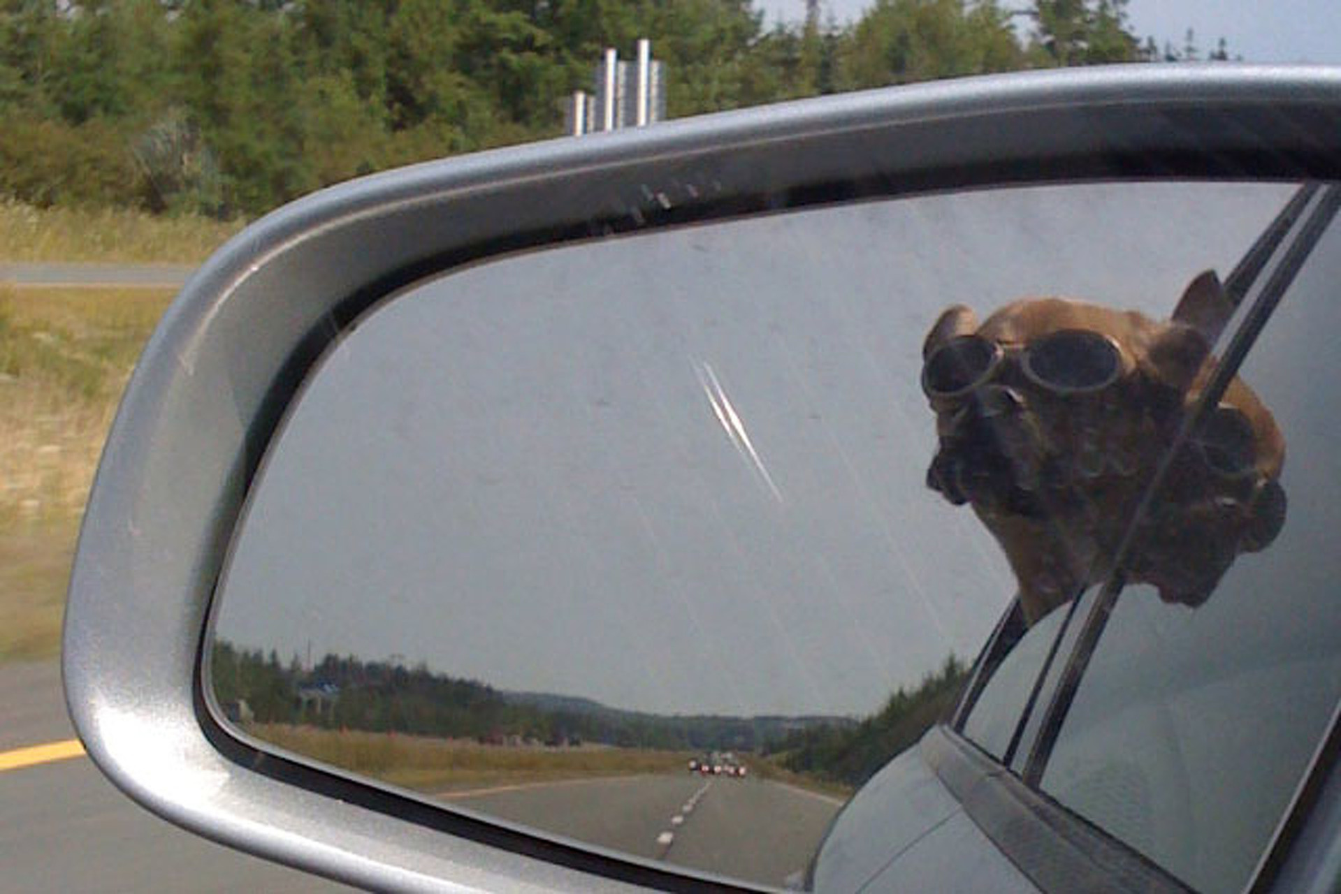 Why put your dog on the Roof like Mitt Romney did, when he can Ride in STYLE