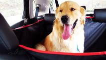 Nissan - tapete - cachorro