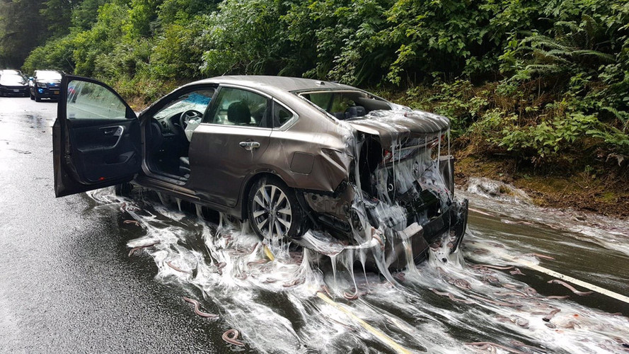 Slime Eels Spilled All Over Highway After Truck Crashes