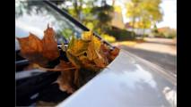 Feuchtbiotop Auto